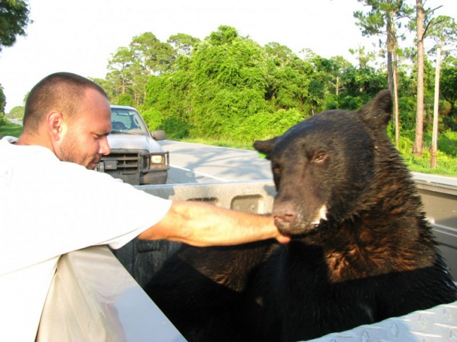 Este increible hombre arriesgo su propia vida para salvar a un enorme oso 14