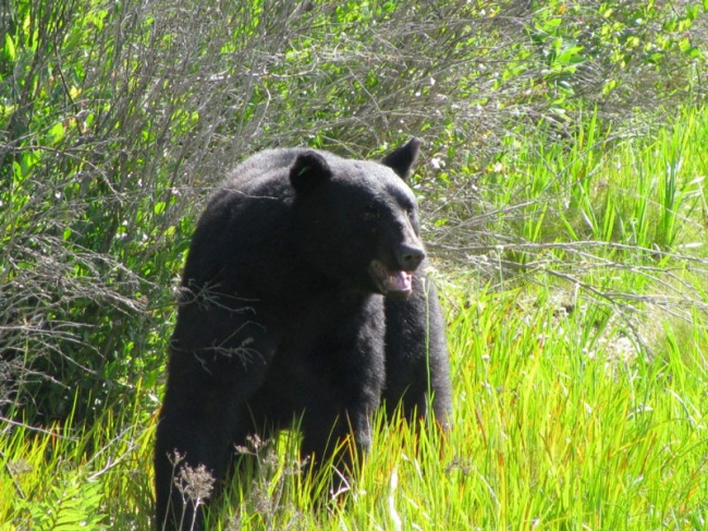 Este increible hombre arriesgo su propia vida para salvar a un enorme oso 15