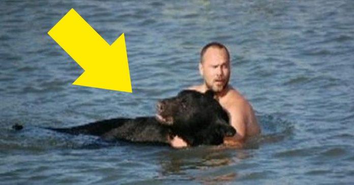 Este increible hombre arriesgo su propia vida para salvar a un enorme oso banner