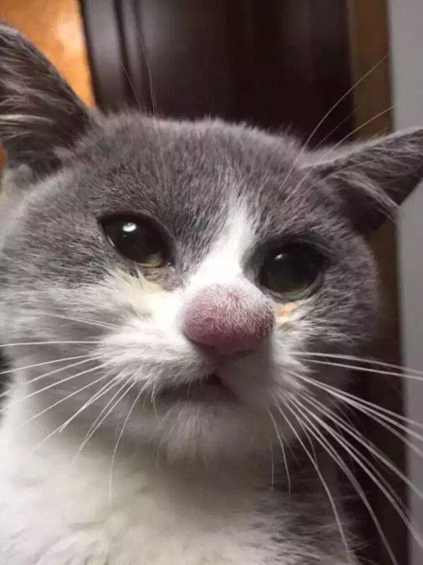 15 Pobres Gatos que se enfrentaron a una Abeja... Y no terminaron nada Bien