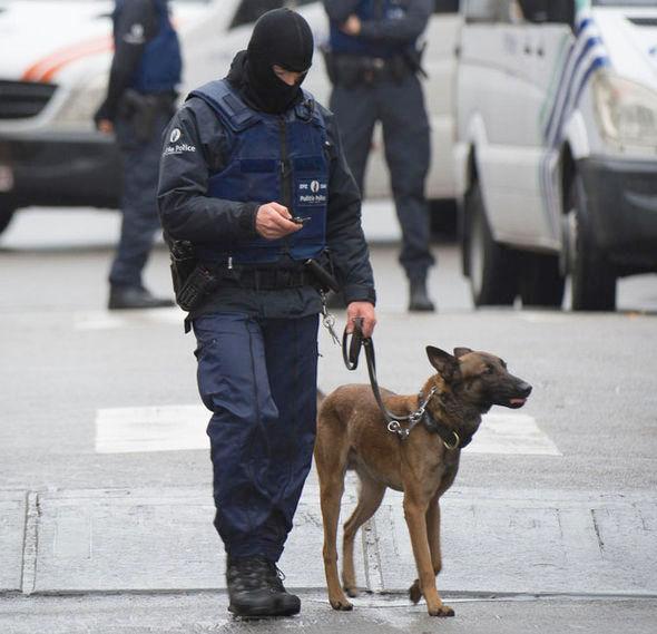 Heroico perro dio su vida en paris el mundo se lo agradece 01