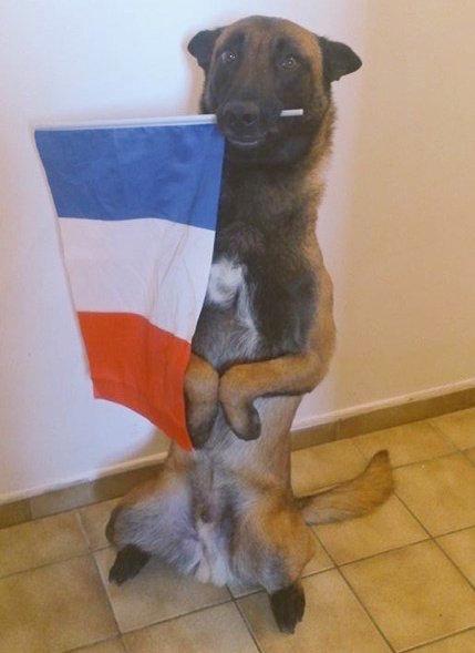 Heroico perro dio su vida en paris el mundo se lo agradece 04