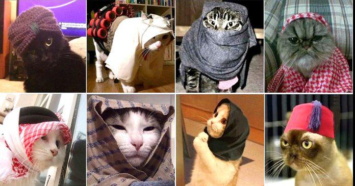 Los belgas responden al terror redadas con gatos