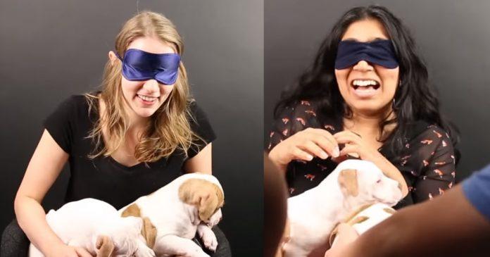 Personas con miedo a los perros se enfrentan a adorables cachorros banner