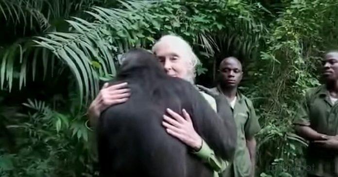 Rescato a este chimpance de una muerte segura y se lo agradecio de forma emotiva banner