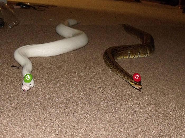 ¿Te dan miedo las Serpientes? ¡Ponles un Gorrito!
