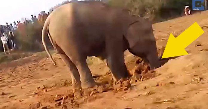 Un elefante paso 11 horas cavando el porque te dejara sin palabras
