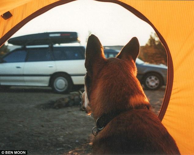 denali El homenaje a un perro de su amado dueno en su batalla contra el cancer 05