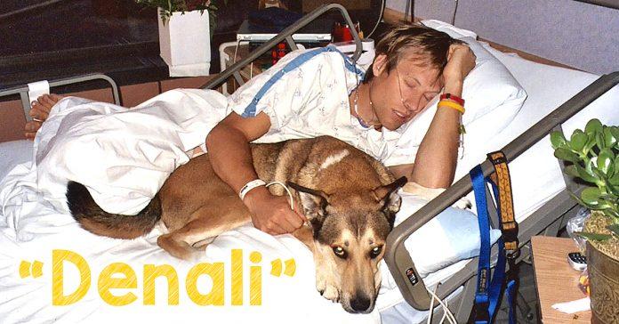denali El homenaje a un perro de su amado dueno en su batalla contra el cancer banner