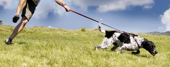 evitar-perro-tirar-de-la-correa