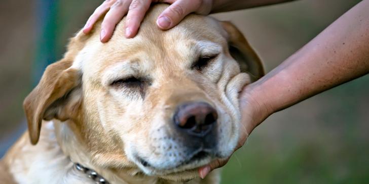 o-DOGS-PREFER-PETTING-facebook