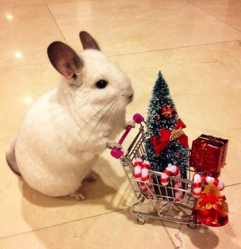 23 Divertidos Animales que están entusiasmados con la Navidad