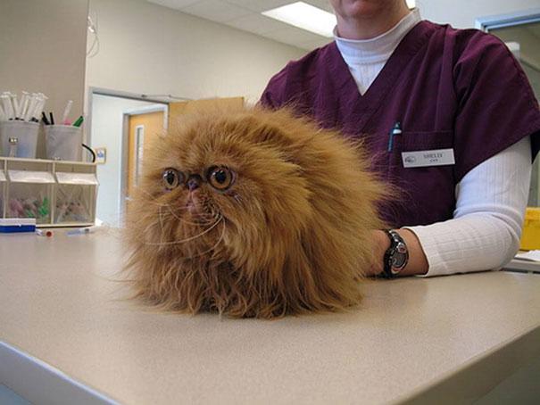 15 Divertidos Gatos descubriendo que les llevaban al Veterinario