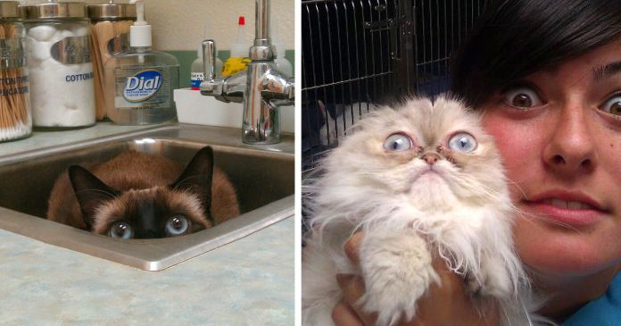 15 Gatos que se dieron cuenta de que los llevaban al veterinario banner