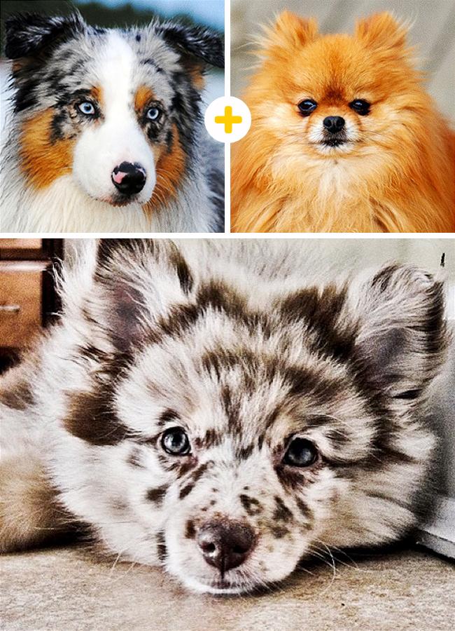 15 Increíbles cruces de Perros que nunca antes Habías visto