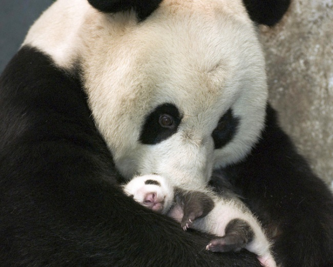 15 bebes animales que derretiran el corazon 03