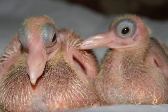 15 bebes animales que derretiran el corazon 07