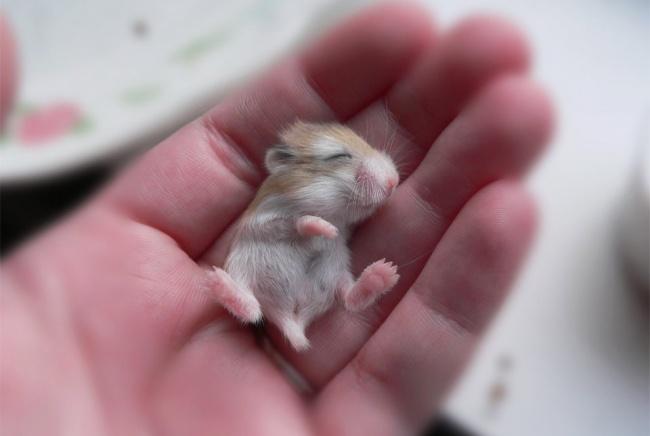 15 bebes animales que derretiran el corazon 08