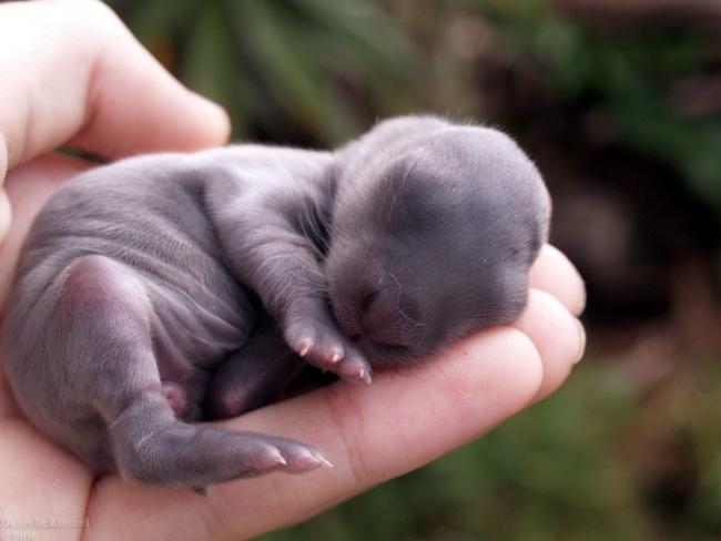 15 bebes animales que derretiran el corazon 09