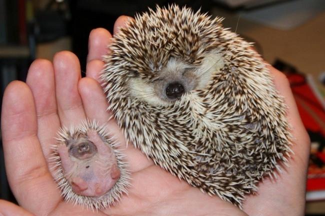 15 bebes animales que derretiran el corazon 15