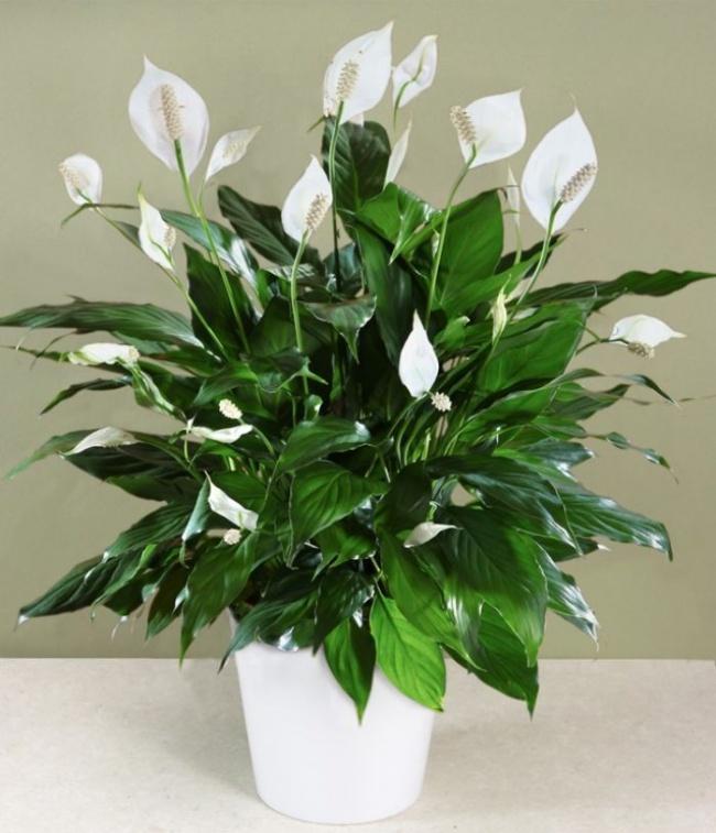 9 Plantas Espectaculares que te ayudarán a Limpiar y Purificar el aire de tu Casa