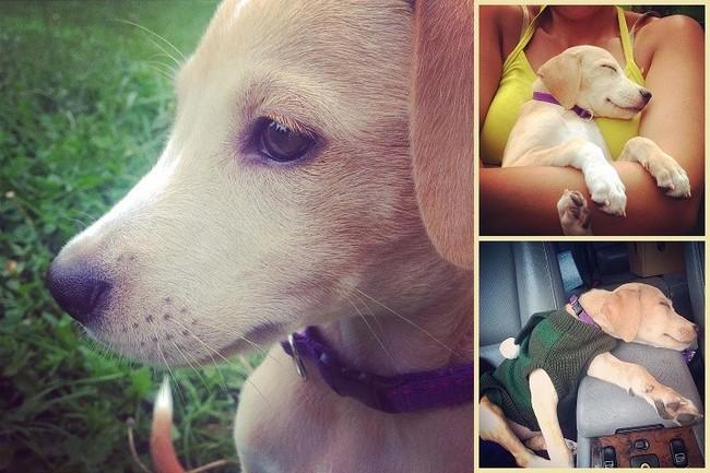 Rompieron el Corazón de este Cachorrito cuando lo devolvieron al refugio del que...