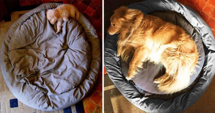 Cachorros que crecieron demasiado rapido 01