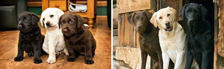 Cachorros que crecieron demasiado rapido 09