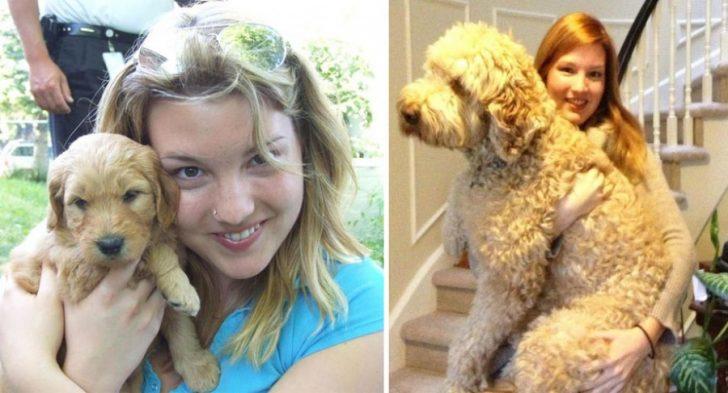 Cachorros que crecieron demasiado rapido 13