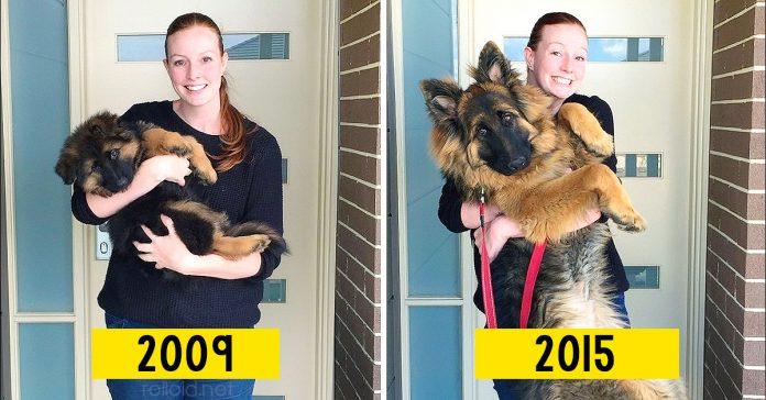 Cachorros que crecieron demasiado rapido banner
