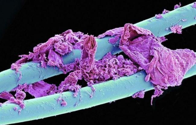 Fotografias Microscopio universo increible 11