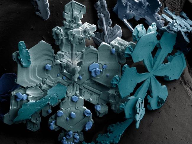 Fotografias Microscopio universo increible 24