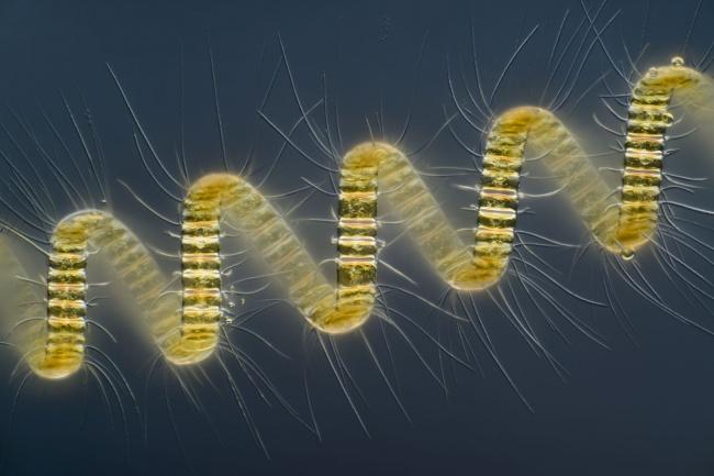 Fotografias Microscopio universo increible 25