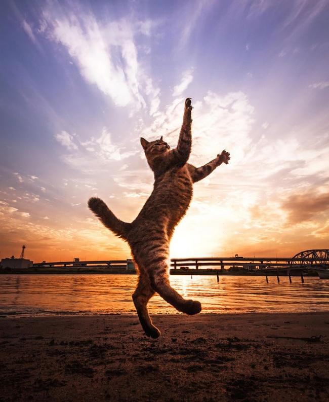Estas Increíbles Imágenes Prueban que los Gatos verdaderamente pueden volar!