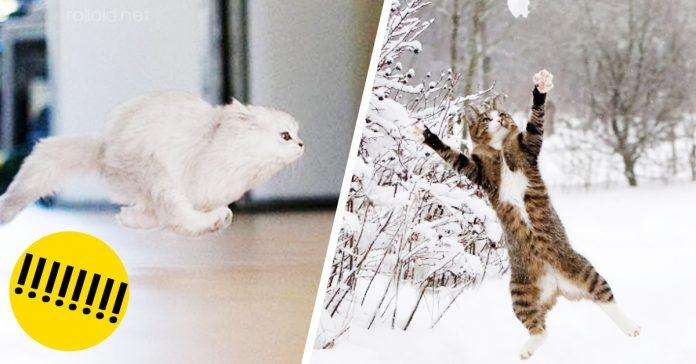 Fotografias gatos pueden volar banner