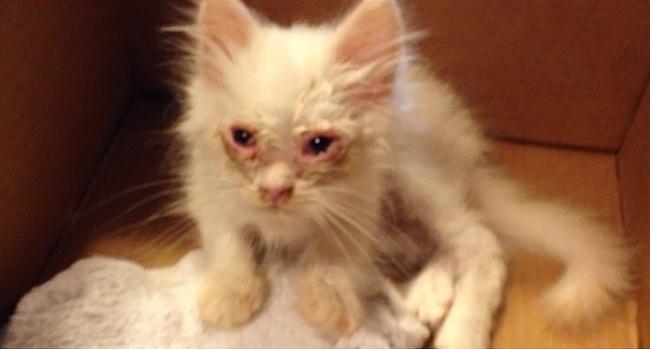 Gatito se transformo en una enorme bola de pelo despues de rescatada 01