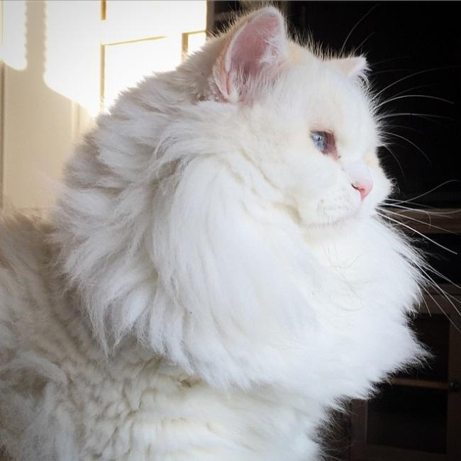 Gatito se transformo en una enorme bola de pelo despues de rescatada 04