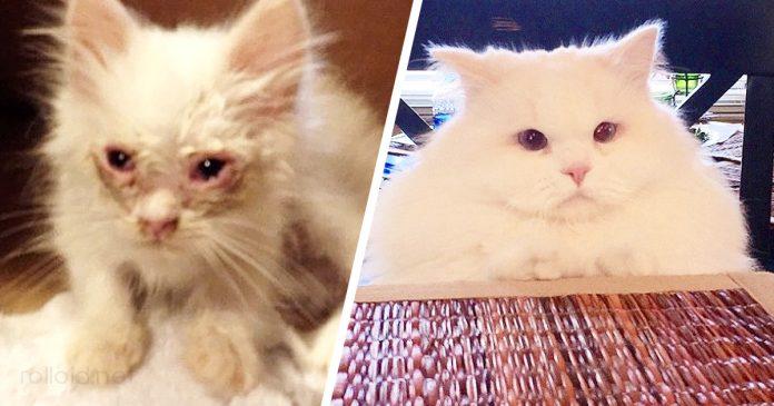 Gatito se transformo en una enorme bola de pelo despues de rescatada banner