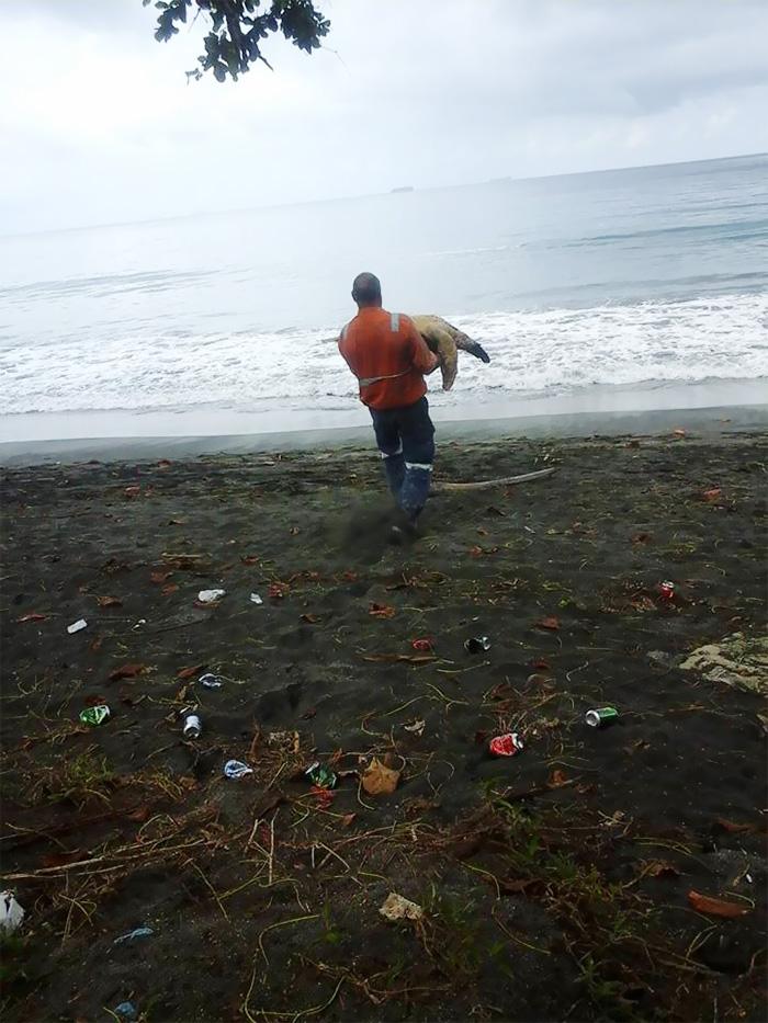 Hombre compra tortugas en el mercado y las devuelve al mar 02