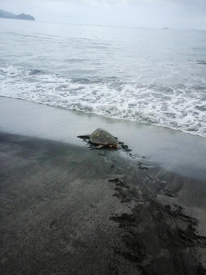 Hombre compra tortugas en el mercado y las devuelve al mar 03