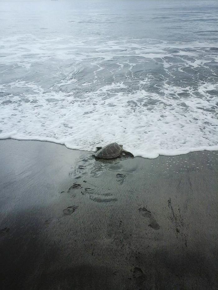 Hombre compra tortugas en el mercado y las devuelve al mar 04
