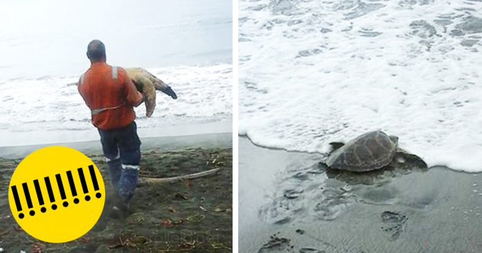 Hombre compra tortugas en el mercado y las devuelve al mar banner