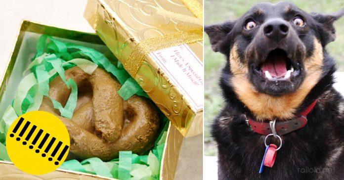Ladrones que roban caca de perro banner
