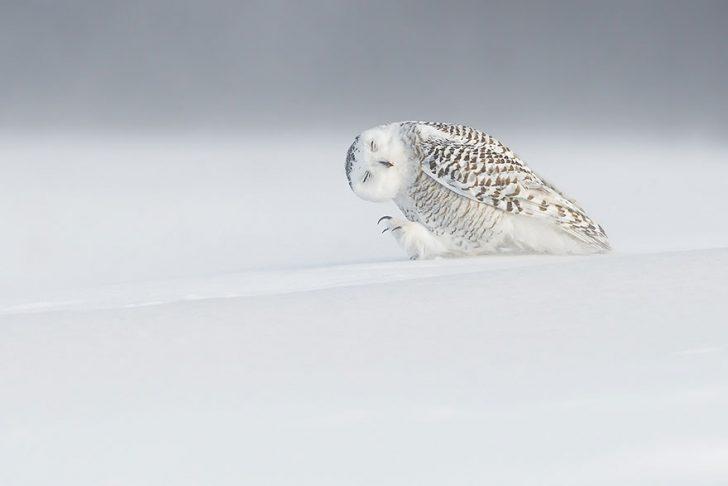Las mejores fotografias de National Geographic de este ano 04