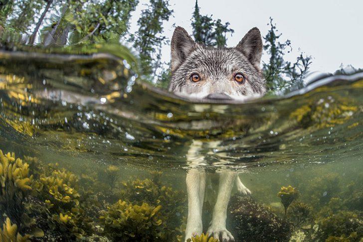 Las mejores fotografias de National Geographic de este ano 06