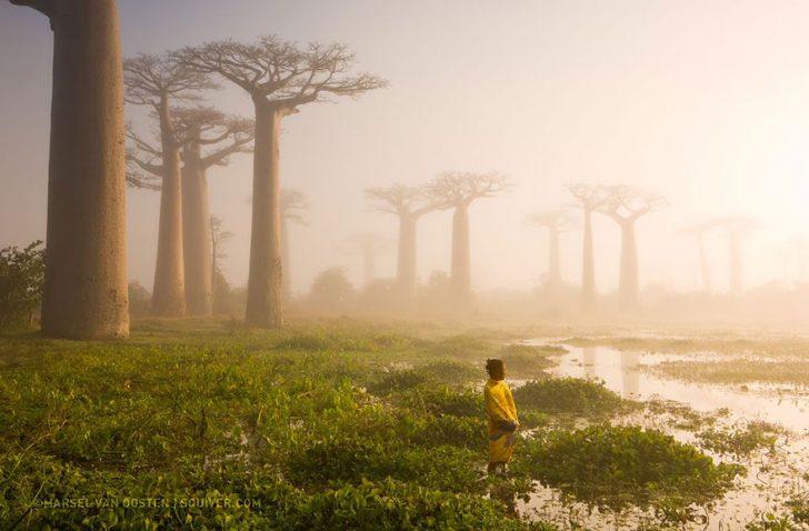 Las mejores fotografias de National Geographic de este ano 07