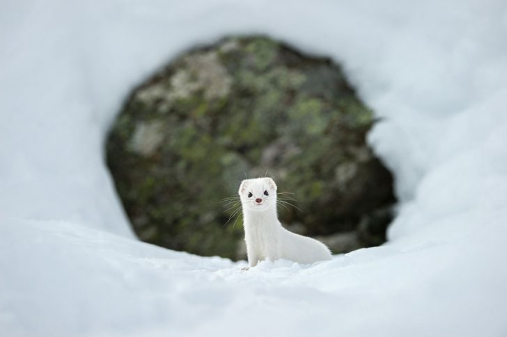 Las mejores fotografias de National Geographic de este ano 12