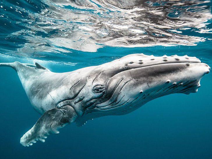 Las mejores fotografias de National Geographic de este ano 13
