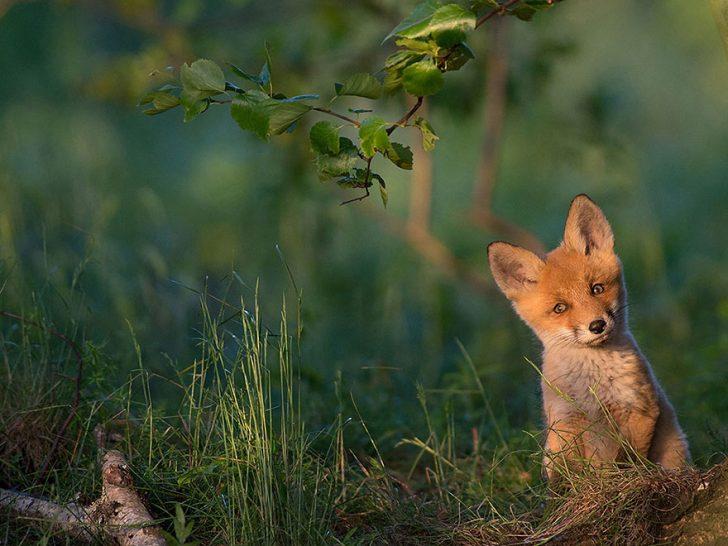 Las mejores fotografias de National Geographic de este ano 15