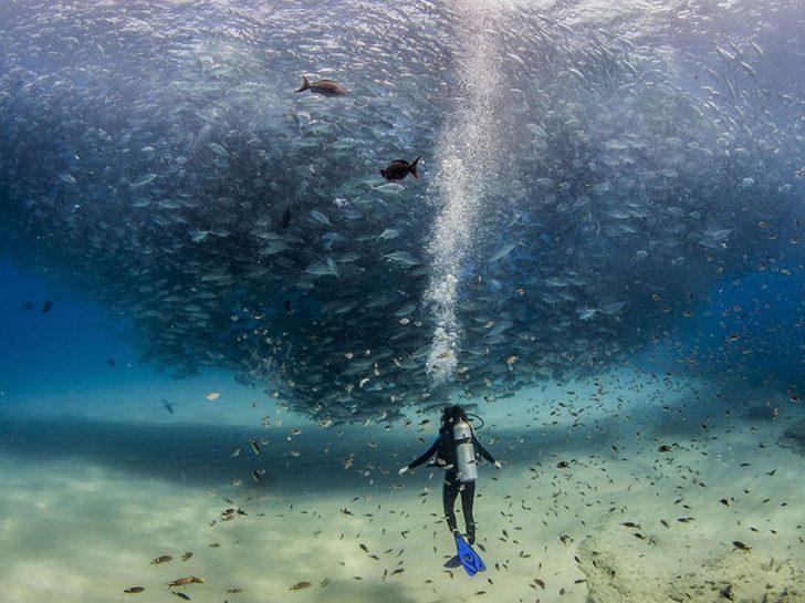 Las mejores fotografias de National Geographic de este ano 18